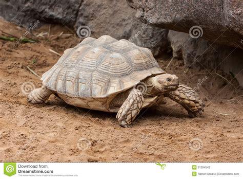 Stork On Tortoise Snake D1816bzgs tortoise stock photography image 31284542