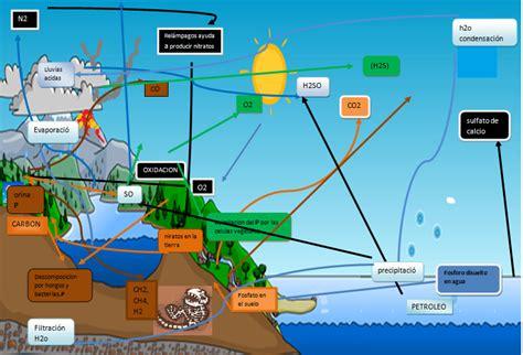 cadenas troficas y ciclos biogeoquimicos biologia ambiental noviembre 2013