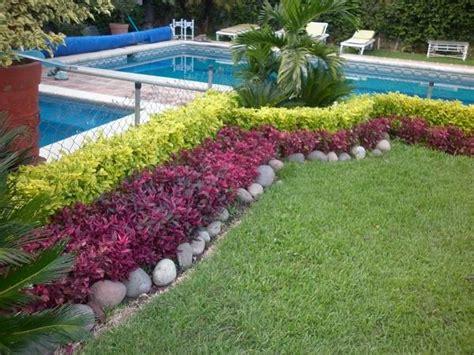 venta de plantas para jardin jardinero en mazatlan venta de pasto y plantas para jardin