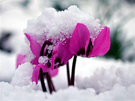 welche bettdecke für den winter der ziergarten im winter naturagart park aktuell