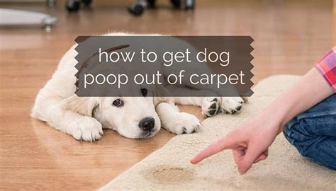 how to get cat smell out of rug diarrhoea on carpet carpet menzilperde net
