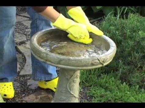 how to clean and maintain bird baths youtube