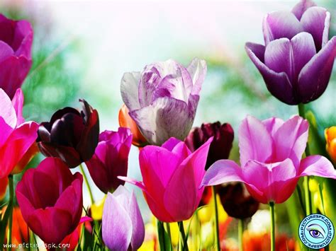 beautiful spring flowers beautiful spring flowers wallpapers wallpapersafari