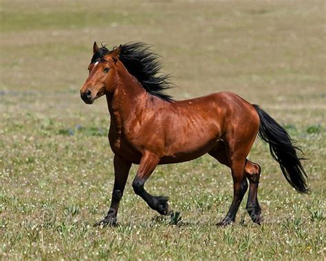 top 10 most beautiful and expensive breeds
