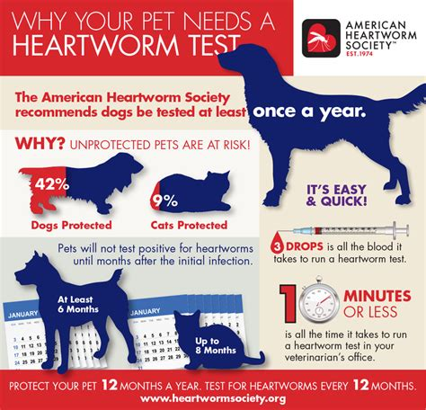 heartworm prevention design supporting animal health driscoll design inc