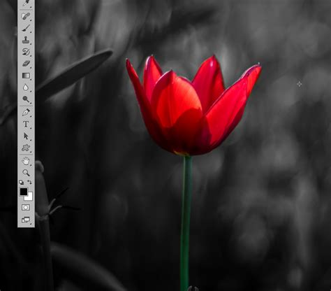 photoshop cs5 tutorial color splash effect tutorial color splash effect in photoshop dreamstale