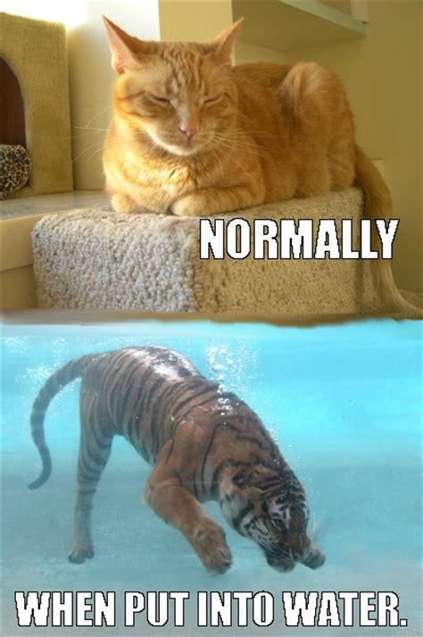 cat vs meme bet like a image 3191885 by yanito on favim