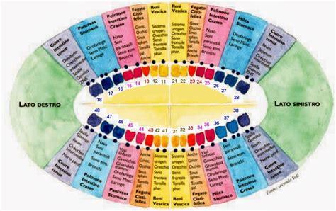 mappa organi interni denti organi interni e malattie forte legame dottor sport