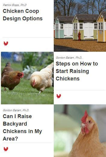 Backyard Chickens Website 17 Best Images About Getting Started With Chickens On