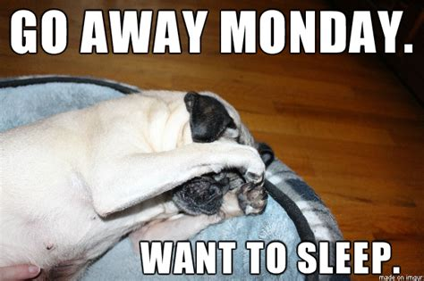 monday pug image gallery monday pug