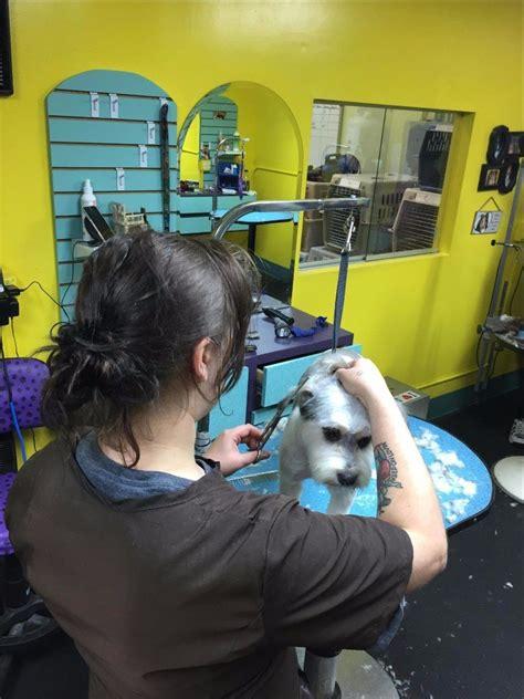grooming omaha pet grooming by llc grooming omaha ne