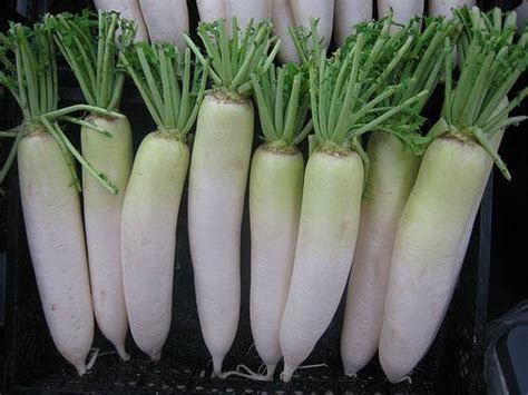 New And Innovative At And Radish by What To Do With Daikon Radishes New Hshire Radio