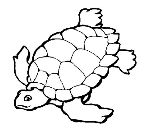 imagenes de tortugas faciles para dibujar dibujos de tortugas marinas 187 tortugamarinapedia