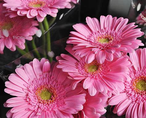 fiori recisi fiori recisi e al mazzo fiorito