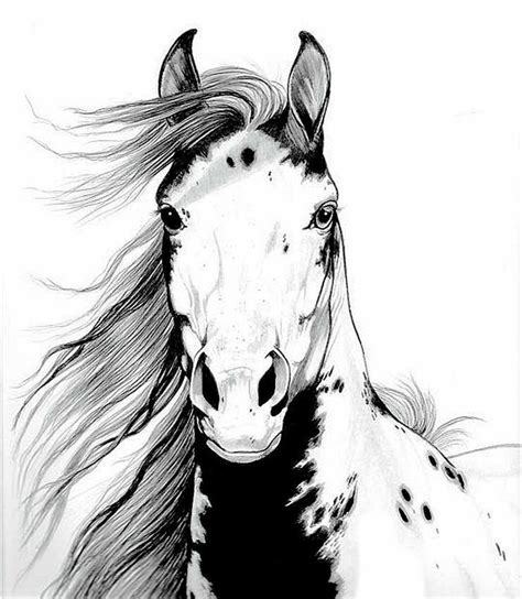 mustang horse drawing a wild mustang draw something pinterest