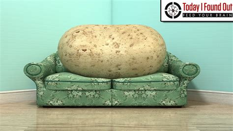 couch potato meaning the lazy origins of the phrase couch potato