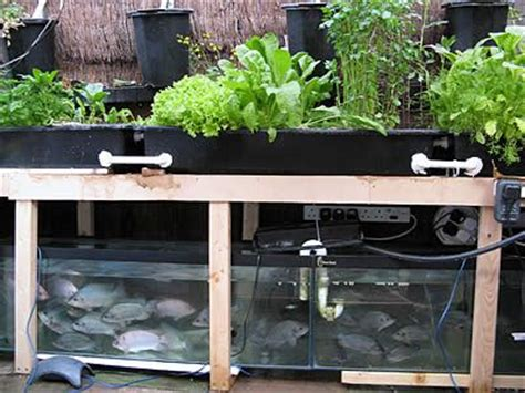 backyard growing system aquaponics do it yourself and aquaponics system on