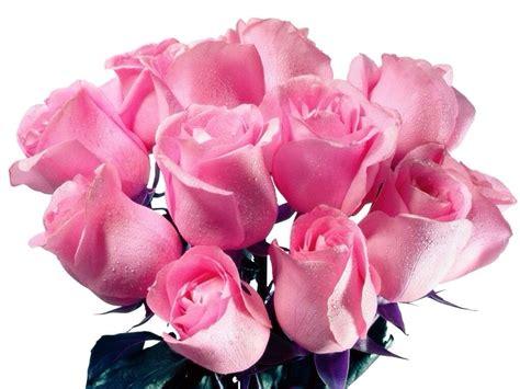 imagenes de flores rositas image gallery hermosas rosas