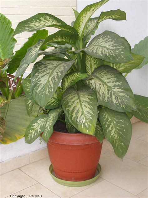 attractive house plants 2015 large house plants