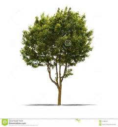 white and green tree green tree on a white background royalty free stock