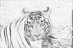 Coloriage Tigre Fort Boyard