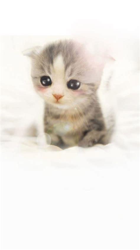 cute scottish fold kitten iphone   hd wallpaper