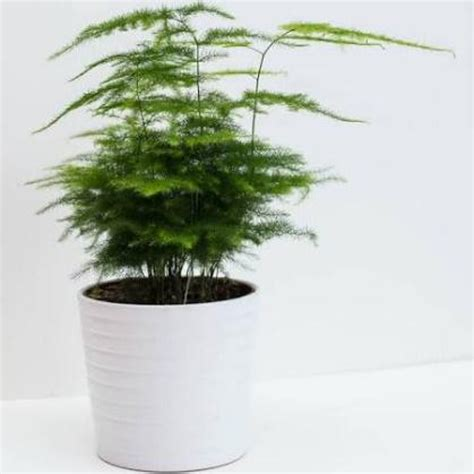 low light organically grown house plant by dandelionsvintage the perfect house plants that act as air purifiers amaliah