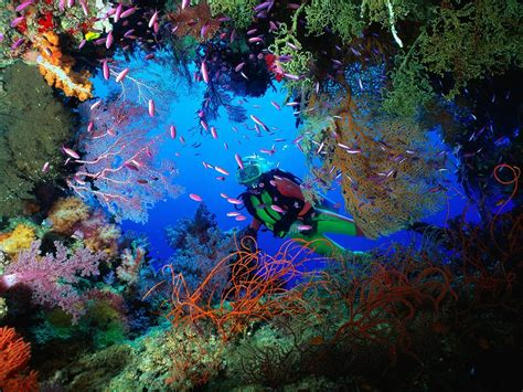 underwater dive what lurks beneath the surface a brief history of modern
