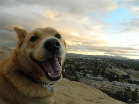 buzzfeed dogs 26 of the happiest dogs of all time