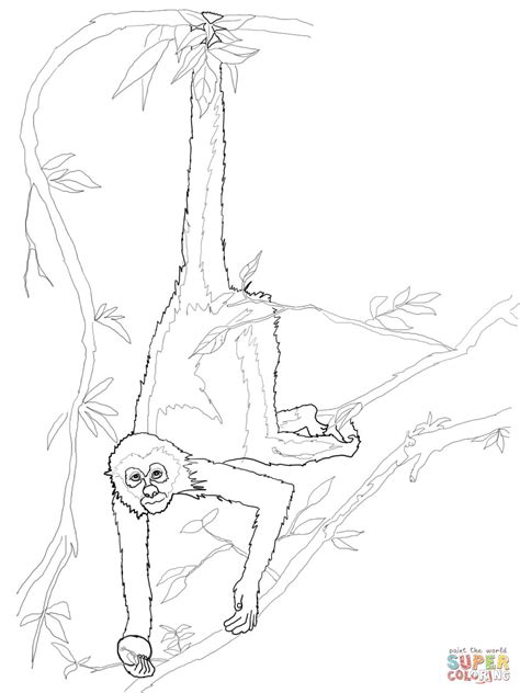 coloring page of spider monkey spider monkey coloring page free printable coloring pages