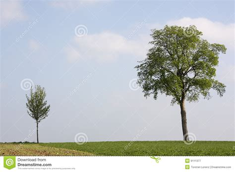 where to put a tree in a small room small and big tree royalty free stock photography image