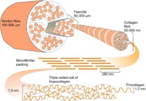 Collagen Biolo helix tensegrity in biology