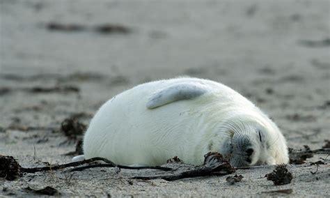 am schlafen schlafen am strand ist sooo toll foto bild