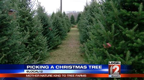 local christmas tree kent oh business booming at local tree farm wkrc