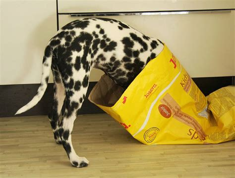 can dogs get constipated cure constipation how to help your pooch to its duty