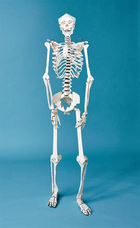 Make Your Own Paper Skeleton - diy size papercraft skeleton