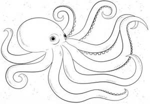 octopus color printable octopus coloring pages coloring me