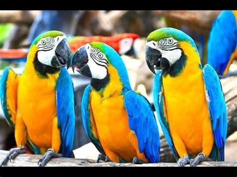 berburu burung di pasar pramuka ims pasar burung pramuka doovi