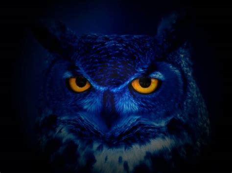 night owls numerounity o for owl