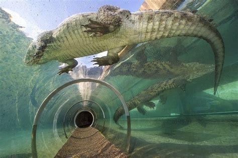mission everglades crocodile zoo miami visit today