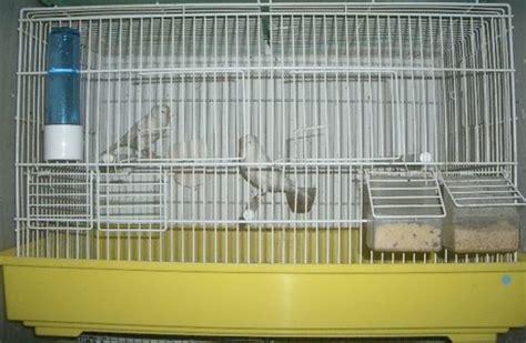 gabbia forum forum di mondo pappagalli leggi argomento il mio cipetto