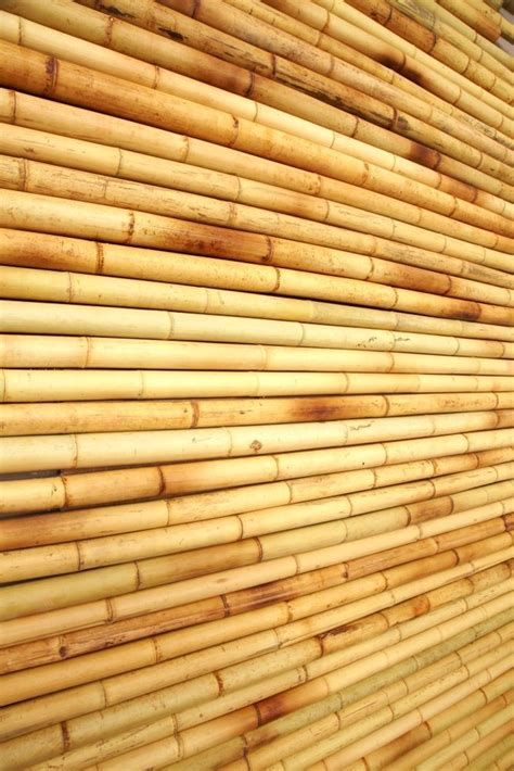 Bamboo Ceiling Book by Best 25 Bamboo Ceiling Ideas On Bamboo Roof