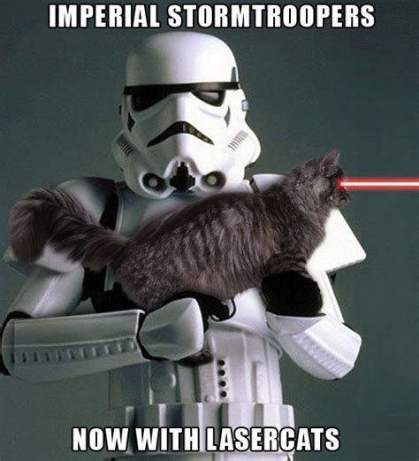 Star Wars Cat Meme - 17 best images about star wars cats on pinterest darth