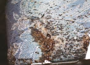 bedbug infestation what causes bed bugs
