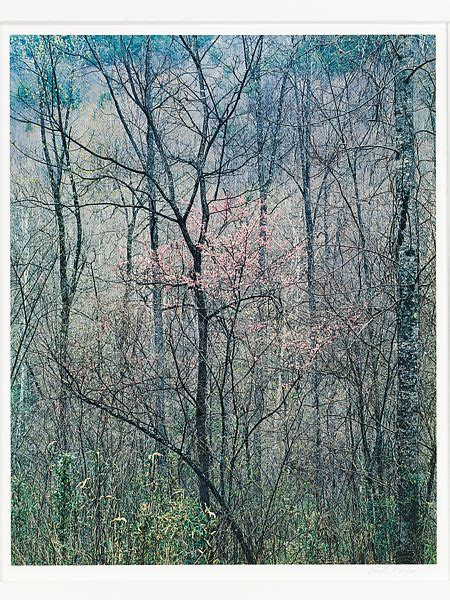 eliot porter redbud trees  bottom land red river