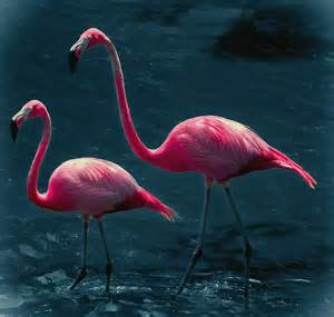 pink flamingos very pink flamingos digital art by digiart diaries by