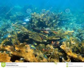sea floor and coral reef stock photography image 35215492