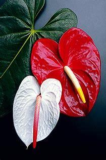 imagenes flores exoticas colombianas cultivos de flores exoticas colombianas