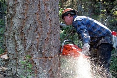 Baum Richtig Fällen 4547 by Baum F 228 Llen Und Schneiden So Machen Sie Den Motors 228 Genschein