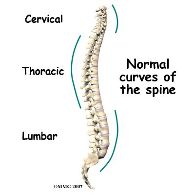 three sections of the spine adult degenerative scoliosis eorthopod com